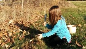 Evelyn Planting Sun Chokes